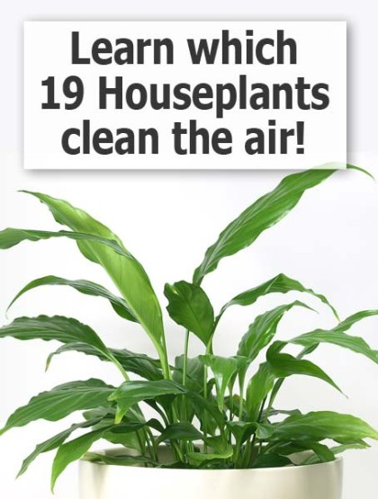 Michigan loses right to farm this week a farewell to - Healthiest houseplants fresh air delight ...