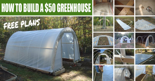 How To Build A 50 Greenhouse Free Plans